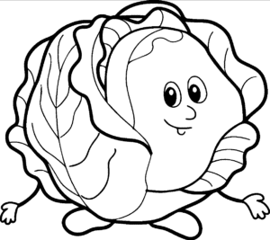 drawing of a cabbage